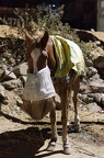 Pferd mit Mundschutz