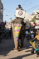 Elefant am Vegetable Market