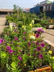 Hier wird Gemüse und Blumen angepflanzt